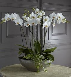 Luxury oval planted orchids