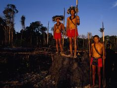 Surui Indians - The indigenous Surui (or Paiter) Indians have lost much of their forest territory to clearing. But recent research has shown that reserves established for Indian peoples are providing significant Amazon forest protection. Indigenous groups make up less than 1 percent (700,000) of Brazil's population, most in the Amazon region.
