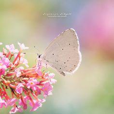 White butterfly in rainbow colours   France, Les Gorges du Verdon | Dreamy  Copyright Lizemijn Libgott  https://instagram.com/lizemijn