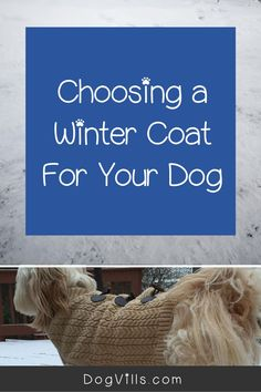 The colder temperatures outside are definitely going to mean you need to know How To Choose A Winter Coat For Your Dog.