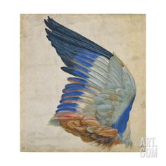 Wing of a Blue Roller, Copy of an Original by Albrecht Durer of 1512 Giclee Print by Hans Hoffmann at Art.com