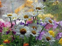 Daisies and more flowers