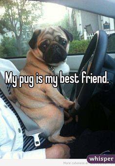 My pug is my best friend.