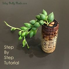 Tutorial for wine cork succulents. Step by step instructions on how to make these adorable wine cork planters! Succulents Diy, Planting Succulents, Wine Cork Art, Wine Corks, Wine Bottles, Cork Crafts, Diy Crafts, Diy Planters, Succulent Planters