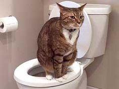 7 Toilet Training Cats Tips