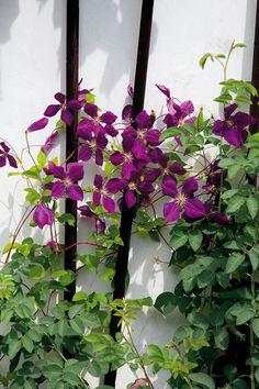 Pohoda venkovské zahrady   HOME Pergola, Floral Wreath, Wreaths, Plants, Gardening, Decor, Floral Crown, Decoration, Door Wreaths