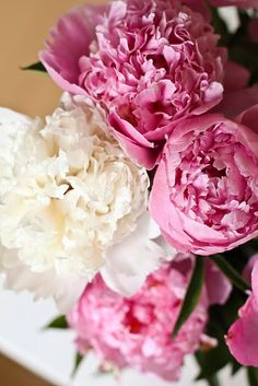 Peonies, I like the feathered insides the best.