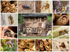 Erstellen eines Insektenhotels