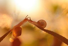 Rain or shine, macro photographer Vadim Trunov captures the surprisingly adventurous lives of snails.