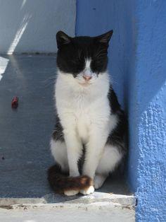 Santorini Island, Greece-Cat