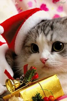 Santa Paws  Wishing You a Purr-fect Christmas