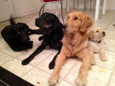 """One of the first """"family"""" portraits with Ripley, Minnow, Crimson & Baby Sequoia"""