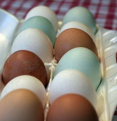 Araucana (also called Easter egg chickens) lay colored eggs.  Regular laying hens lay the white & brown varieties.
