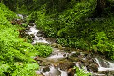 Mountain stream ...  Carpathains, area, autumn, beauty, brook, clean, colors, creek, day, environment, falling, fast-moving, flowing, foliage, forest, freshness, green, idyllic, landscape, leaf, lichen, lush, moss, motion, mountains, national, nature, nobody, outdoors, park, plant, purity, rapid, ravine, river, rivulet, rock, scene, scenics, speed, splashing, stone, stream, tree, water, waterfalls, wilderness, woods, zen-like0