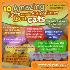 10 amazing facts about cats!