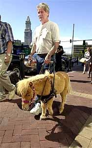 If I ever get to the point of needing a guide animal, please, someone get me a guide horse or mule or donkey! ~cb