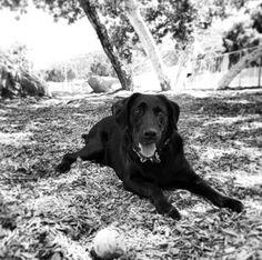 Photo ready at Crescenta Valley Dog Park - La Crescenta, CA - Angus Off-Leash #dogs #puppies #cutedogs #dogparks #lacrescenta #california #angusoffleash