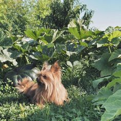 """""""Back in the game !  Ruling over the pumpkin field. """" #dog"""