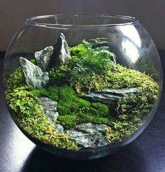 ¿Eres amante de ver paisajes? Crea tu mini paisaje en casa, con plantas de verdad o artificiales y rocas. Aquí unas ideas.