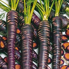 Visit us to learn more about our Purple Haze Hybrid Carrot. This All-America Selections winner boasts a deliciously sweet flavor coupled with a bright purple. Garden Bulbs, Garden Plants, Garden Art, Garden Ideas, Fruit And Veg, Fruits And Vegetables, Weird Fruit, Seed Tape, Carrot Flowers