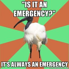... and it will be an emergency again in 5 minutes!
