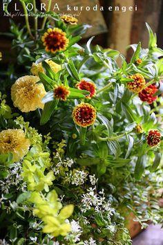 ジニア・オールドファッションの寄せ植え フローラのガーデニング・園芸作業日記