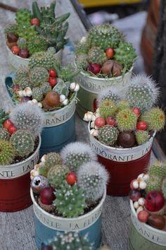 Cactus y suculentas #succulents #containers