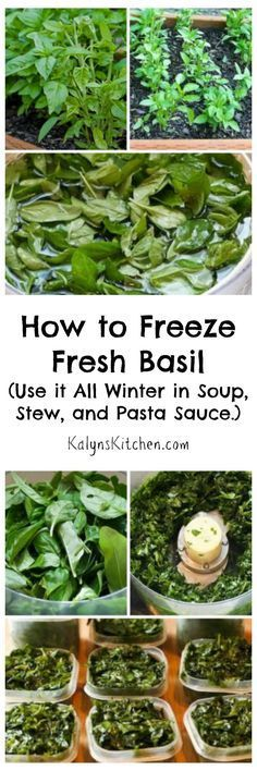 For years and years I've been trimming my garden basil, freezing it, and then using the basil all winter in soup, stew, and pasta sauce, and this post has all my tips for successfully freezing basil. [from http://KalynsKitchen.com]