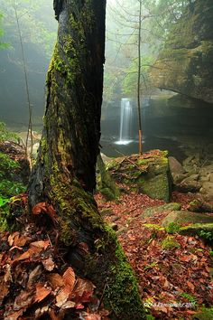 Daniel Boone National Forest, view of Dog Slaughter Falls Places To Travel, Places To See, Daniel Boone National Forest, Cumberland Falls, Red River Gorge, My Old Kentucky Home, Beautiful Places To Visit, Outdoor Photography, Places Around The World