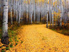 Лучшие фотографии августа 2012 от National Geographic (часть 2)