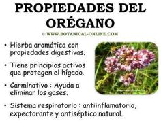 Propiedades del orégano Health And Beauty, Health And Wellness, Health Fitness, Holistic Medicine, Natural Medicine, Herb Seeds, Kitchen Witch, Medicinal Herbs, Alternative Medicine