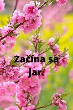 Slovak lessons for children, students and adults Bratislava, Students, Children, Plants, Kids, Planters, Sons, Child, Plant