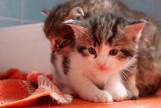 cats finest #cutkittens 5 weeks Habl Katzen