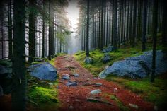 rocky path through moss and granite woods in the Karelian forest, Finland