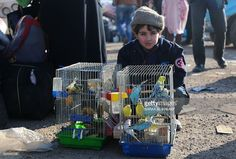 Syrian boy, who was evacuated from the last rebel-held pockets of Syria's northen city of Aleppo, sits next to bird cages upon arriving on December 20, 2016 in the opposition-controlled Khan al-Assal region, west of the embattled city. At least 25,000 people have left the bombed-out eastern districts of Syria's Aleppo since evacuations began last week, the International Committee of the Red Cross said. / AFP / Baraa Al-Halabi