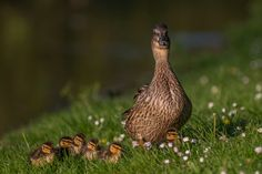 Proud mom by Piotr Galus on 500px.com