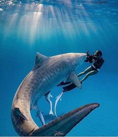Explore the ocean - marine life - A shark and a female diver, Pesca Sub, Shark Pictures, Shark Diving, Scuba Diving, Whale Sharks, Cage Diving With Sharks, Whales, Shark Swimming, Delphine