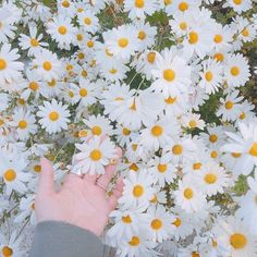 Wallpapers Tumblr, Cute Wallpapers, Flower Aesthetic, Blue Aesthetic, Flower Wallpaper, Wallpaper Backgrounds, My Flower, Beautiful Flowers, Flower Road