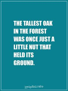 The tallest oak in the forest was once a little nut that fell to the floor and held its ground