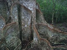 8 of the creepiest trees on Earth | MNN - Mother Nature Network