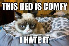 Make your self comfy grumpy cat