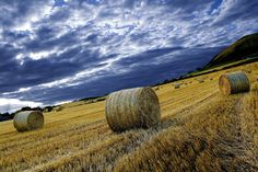 Straw Bales | by sparky2000