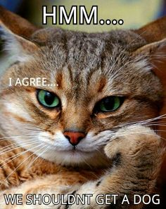 Kitty has a say.