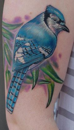 Realistic color blue jay tattoo
