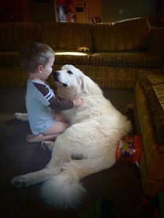 Top 6 Dog Breeds That Make The Best Emotional Support Animals Pyrenees Puppies, Great Pyrenees Dog, Dogs And Puppies, Animals For Kids, Animals And Pets, Baby Animals, Cute Animals, Big Dogs, I Love Dogs