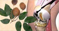 L'olio di copaiba è un antico rimedio naturale utilizzato sin dai tempi dei Maya, degli Incas e degli indiani brasiliani, quasi sconosciuto in occidente. Si tratta di un olio estremamente potente utilizzato per curare...