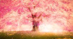 anime cherry blossom gif - Google Search