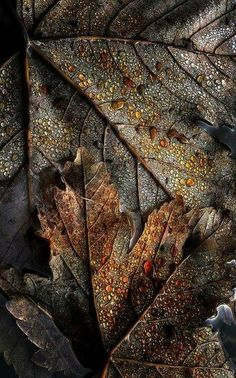 """~Autumn~ """"Now Autumn's fire burns slowly along the woods and day by day the dead leaves fall and melt. Foto Art, Pics Art, Wabi Sabi, Textures Patterns, Autumn Leaves, Fallen Leaves, Color Inspiration, Favorite Color, Beauty"""