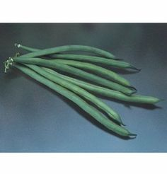 """Bean Jade Bush Green 200 Organic Seeds by David's Garden Seeds by David's Garden Seeds. $4.32. Long attractive pods that are 6-7 inches long with incredible tenderness and taste. Days to Maturity: 53. Germination rate: 80%. David's Garden Seed's owner's all time favroite. Non-GMO and easy to use. Gourmet quality beans. Jade's slender, 6-7"""", deep green pods grow on large upright plants that keep the beans clean and straight. High yielding even when stressed by heat or cold."""