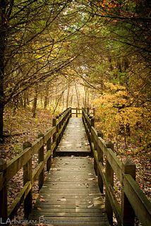 Rockbridge State Park, Columbia, MO
